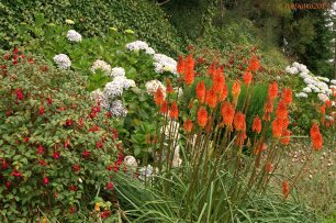 Blütenpracht am Wegrand in Madeira