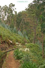 Wanderweg an einer Levada / Madeira