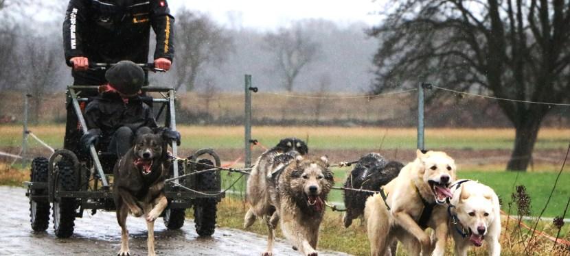 Husky – Power in Wörlitz direkt am Wörlitzer Park Schlittenhunderennen am 5. und 6. März 2016