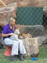 Tiger Cubs in the Secret Garden, Las Vegas