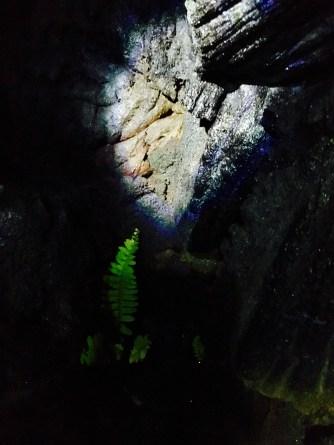 Growing Fern between Lava Rocks