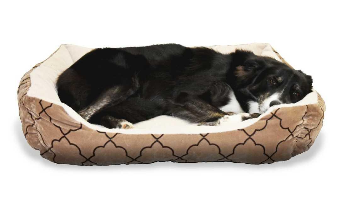 orthop disches hundebett f r gesunden schlaf wohnmobilista. Black Bedroom Furniture Sets. Home Design Ideas