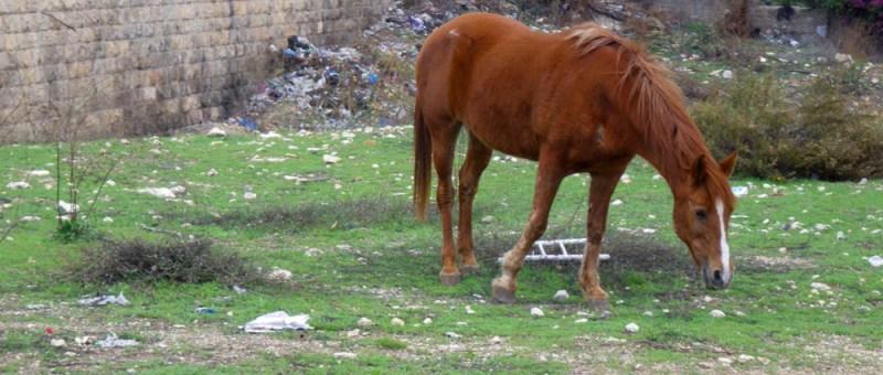 Foto Steht ein Pferd auf der Flur...