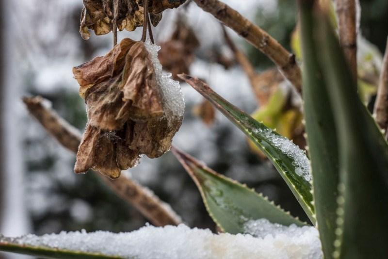 Foto Frostiges Pflänzchen