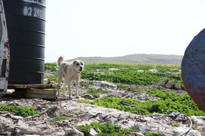 Foto Wachhund