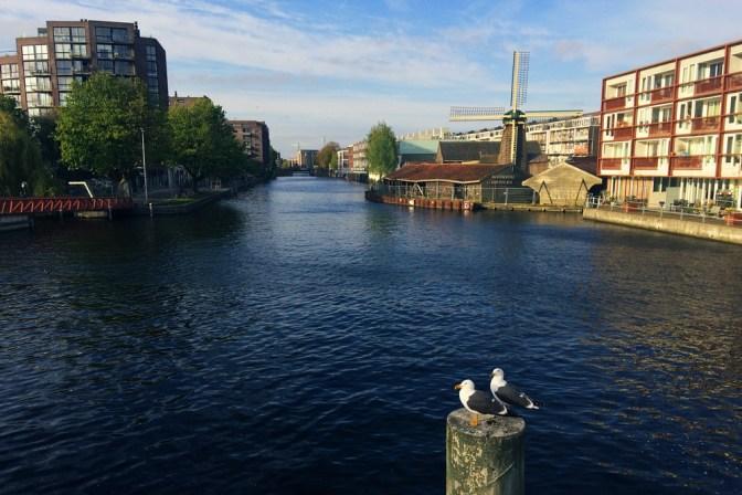 Foto Möwen in Amsterdam