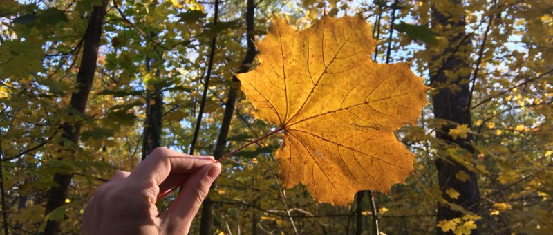 Foto Herbstblattauslese