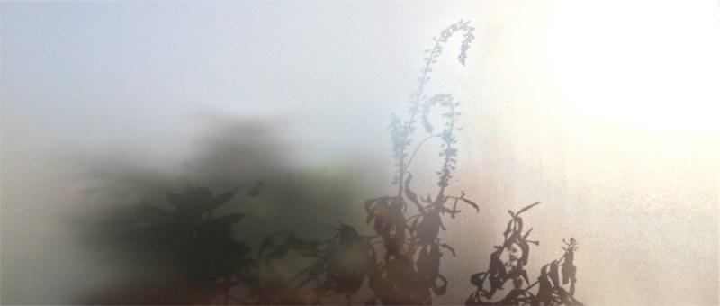 Foto Schattengewächs