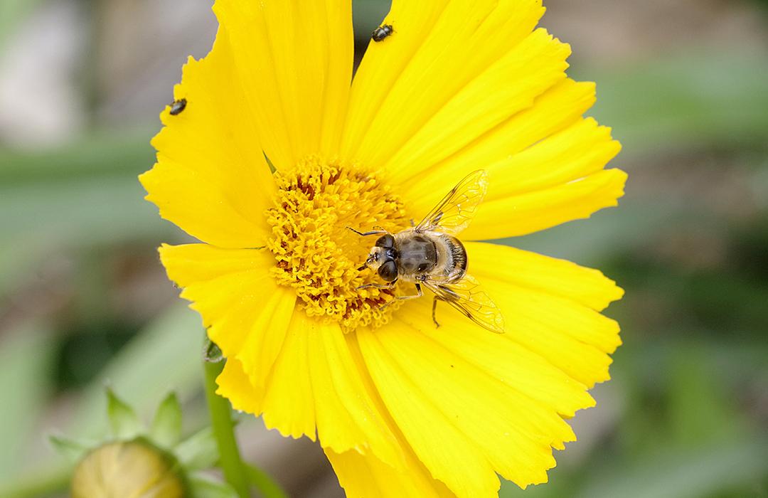 Utrecht: ciudad de abejas