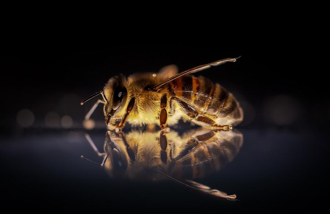 La extraña respuesta de las abejas a la crisis del plástico