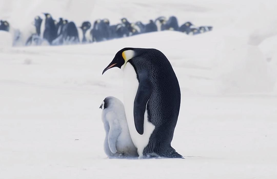 De viaje a la Antártida con Airbnb y Ocean Conservancy
