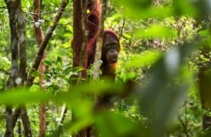 Te damos algunas razones para evitar productos con aceite de palma
