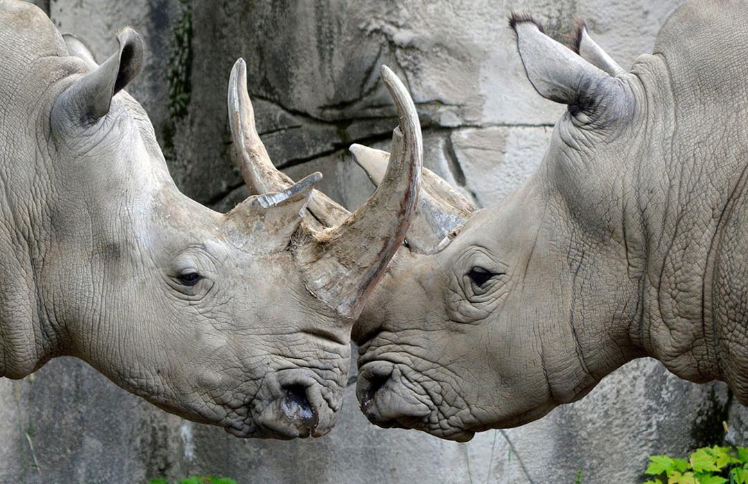 Este zoológico transforma las heces de animales en energía
