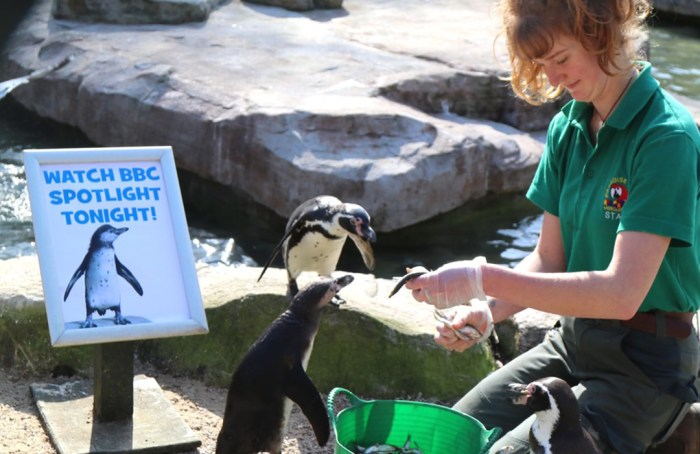 Trabajadoras se aíslan en zoológico para cuidar a los animales