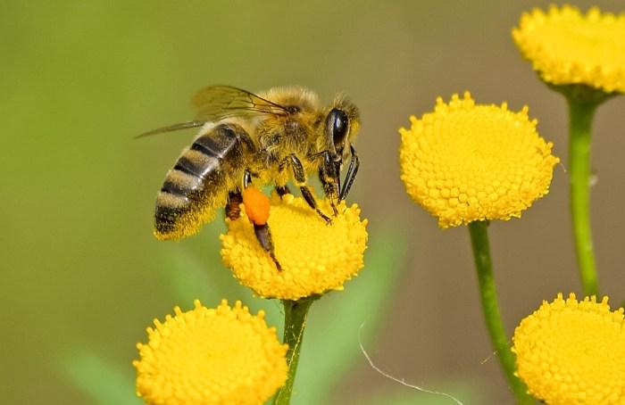¿Qué tan importantes son las abejas en el mundo?