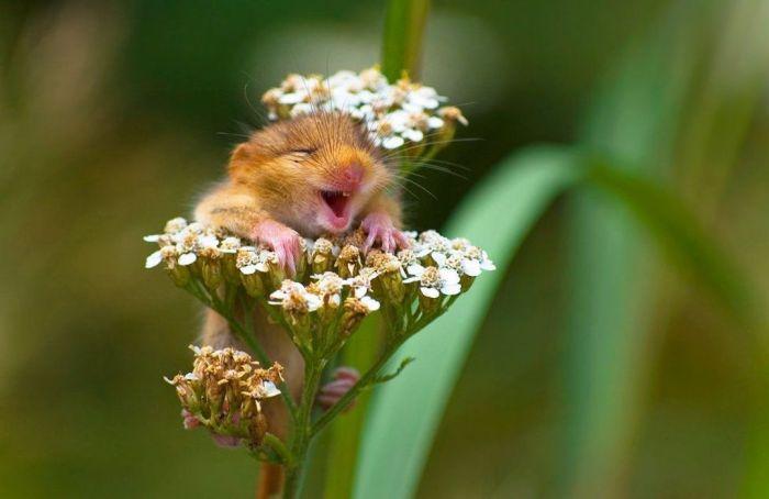 El lado más tierno de los animales en los Comedy Wildlife Photography Awards
