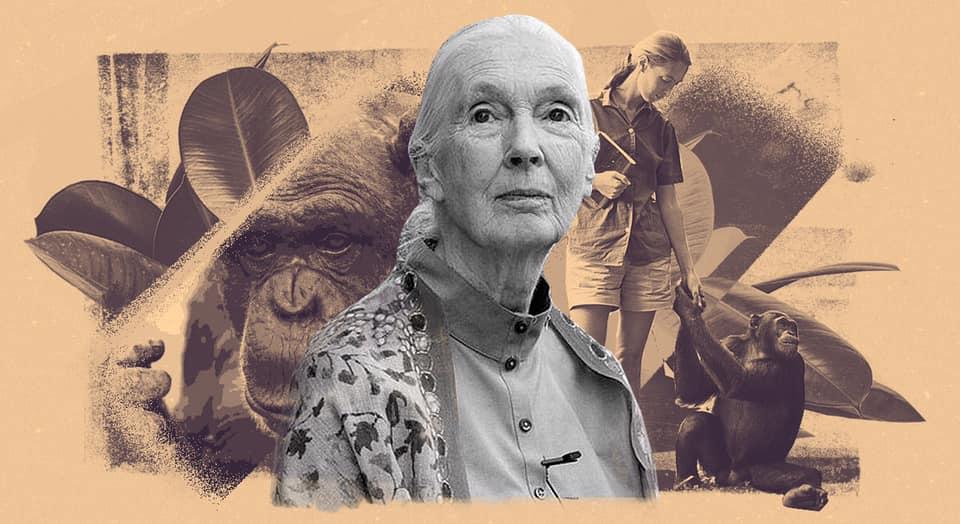 El Instituto Jane Goodall dará un curso en línea de conciencia ambiental