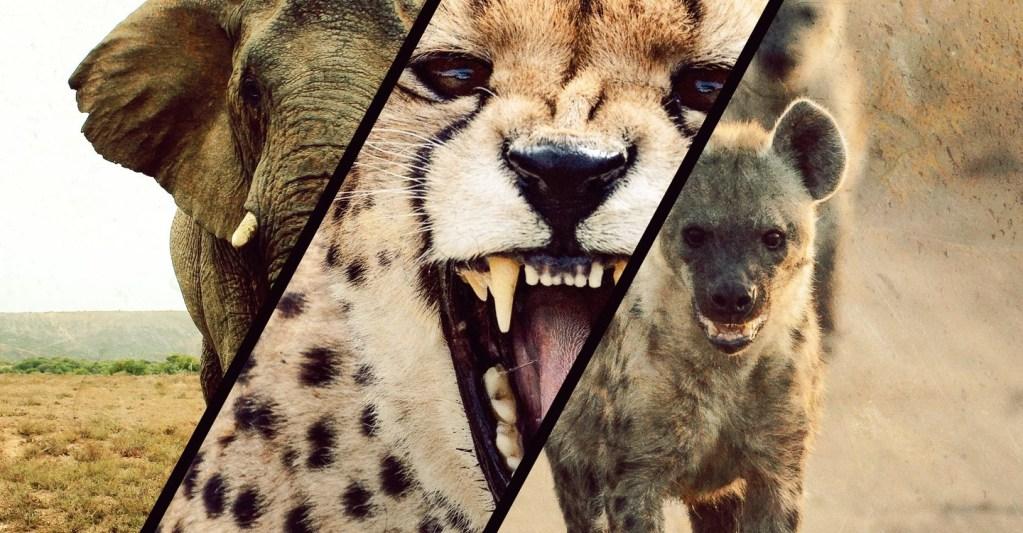 Reese Witherspoon presenta documental sobre las reinas del mundo animal