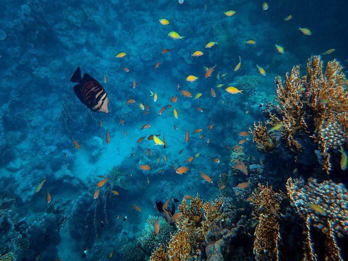 Rescatar los océanos podría alimentar a un billón de personas al día