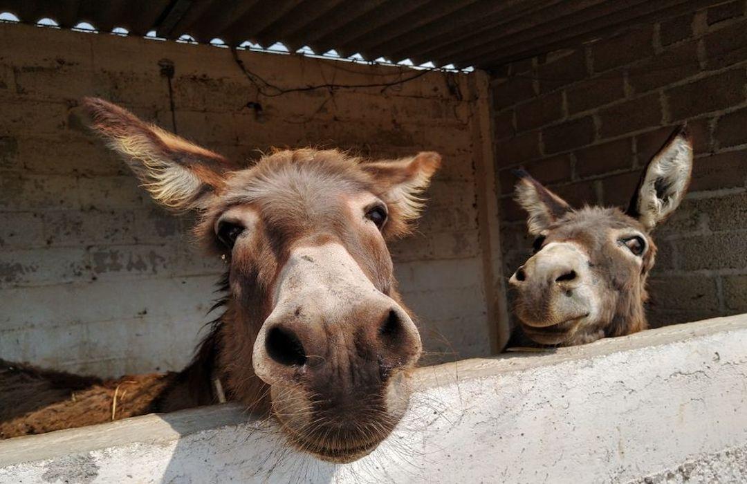 Burrolandia, la asociación que rescata y protege a los burros
