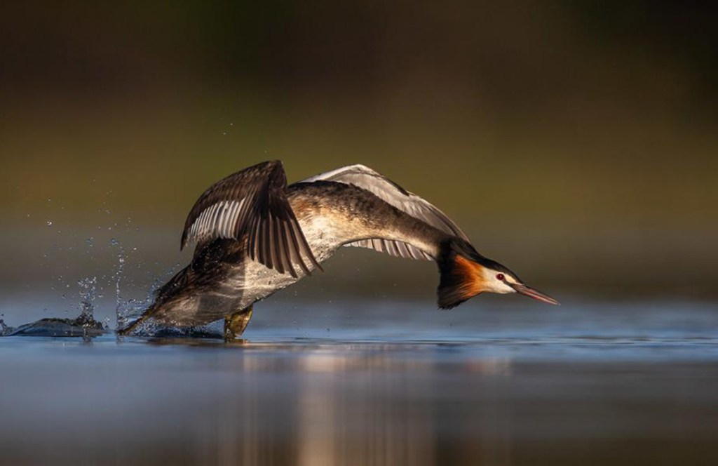 Las espectaculares imágenes de los ganadores del concurso Fotógrafo de Aves 2020