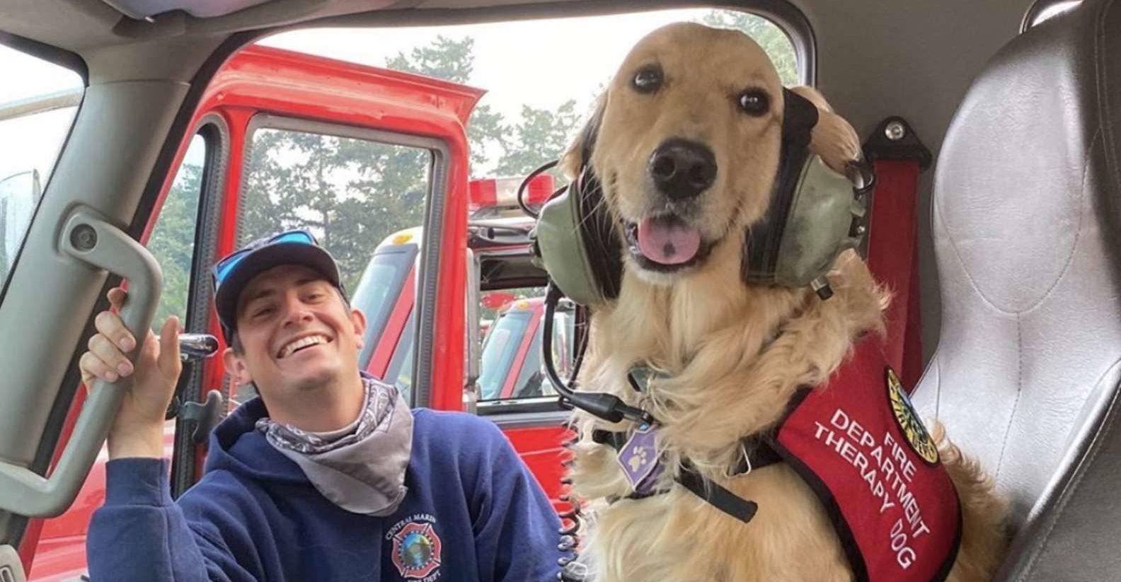 Esta perrita da apoyo moral a los bomberos durante los incendios en California