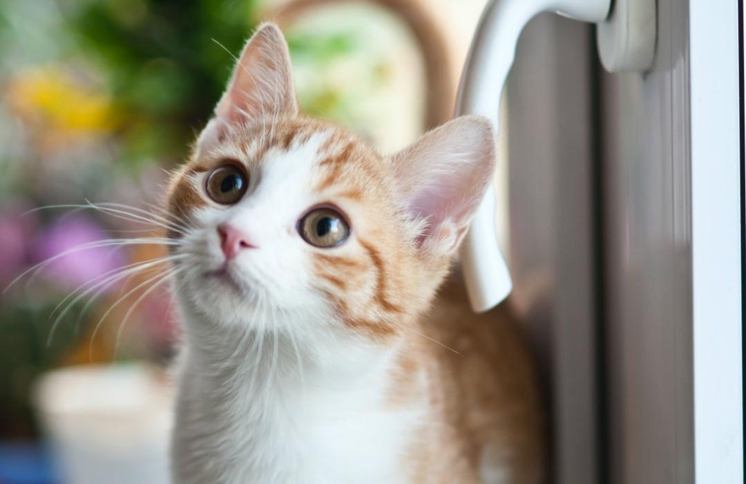 Video: La tierna y astuta manera en que una niña pide a sus padres que adopten un gato