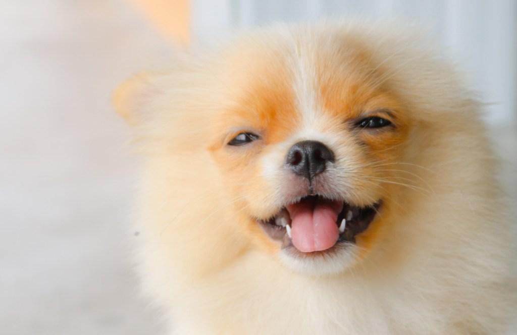 Estudio: los perros sí logran comprender los elogios