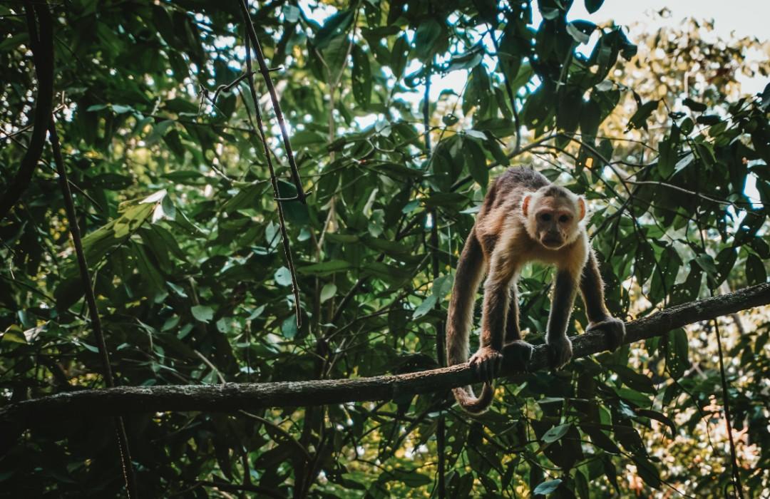 Santander busca fomentar el desarrollo sostenible en el Amazonas