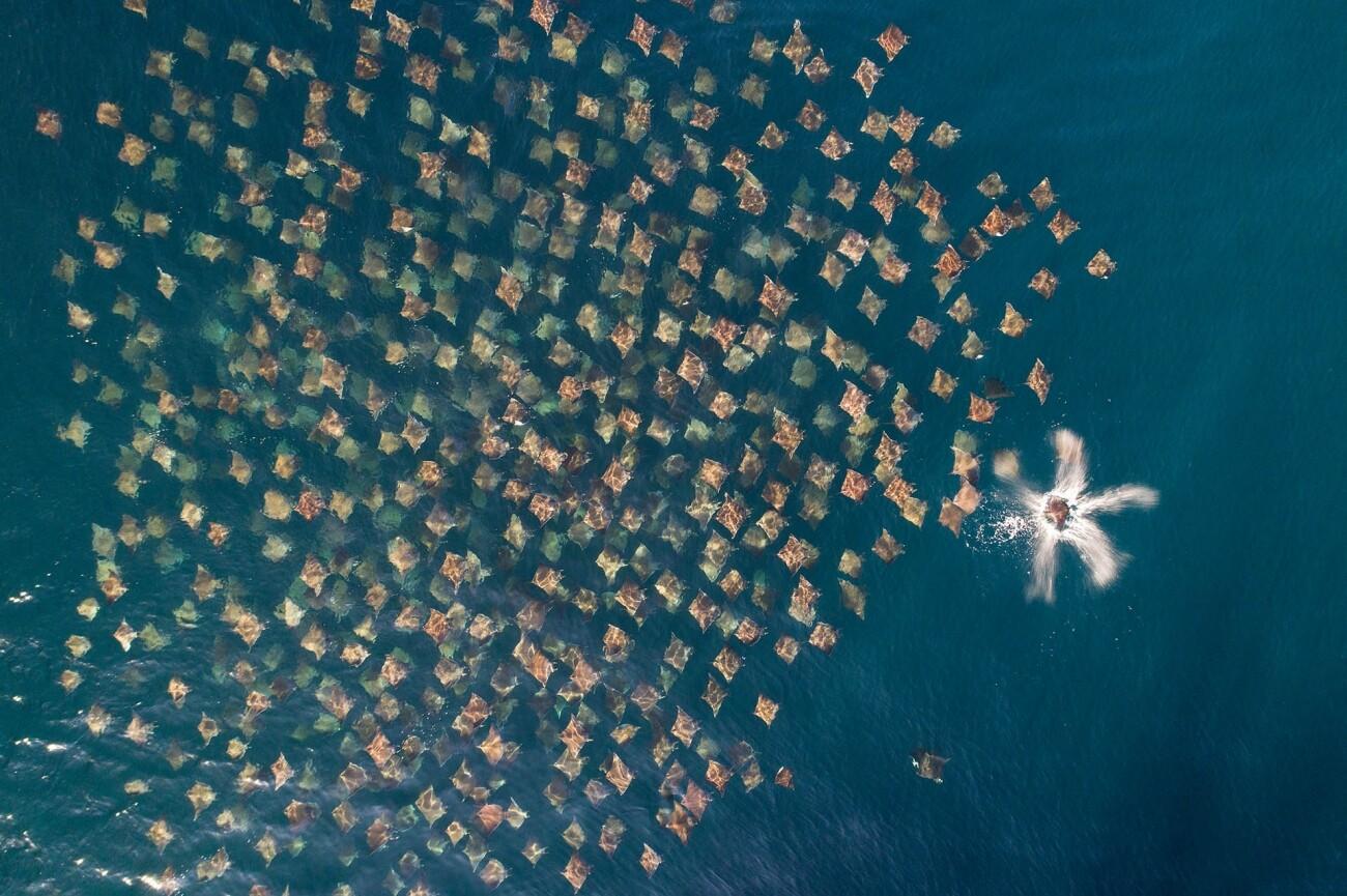 Drone Photo Awards 2020: no te pierdas las increíbles imágenes ganadoras tomadas por drones