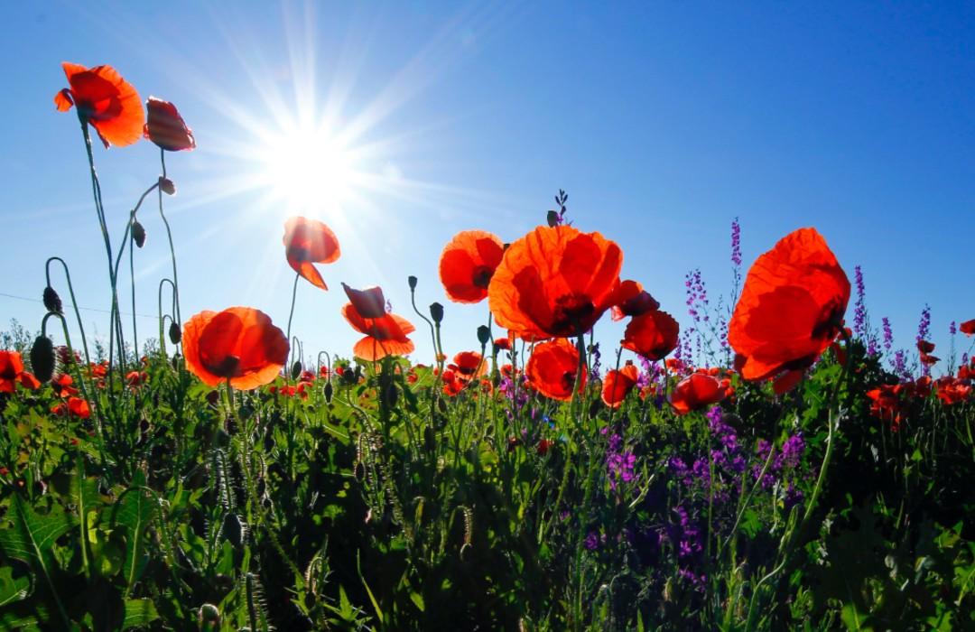Las flores están cambiando su color para adaptarse al cambio climático