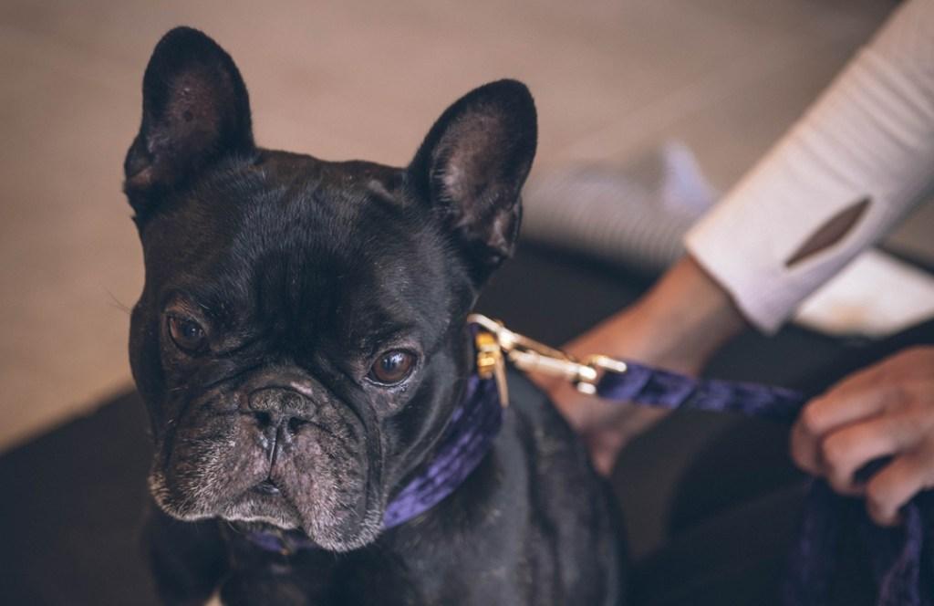Para búsquedas relacionadas a relaja a tu perro