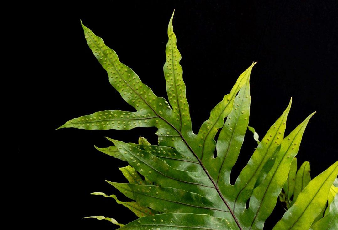 Casa Botánica, el sueño de los amantes de las plantas