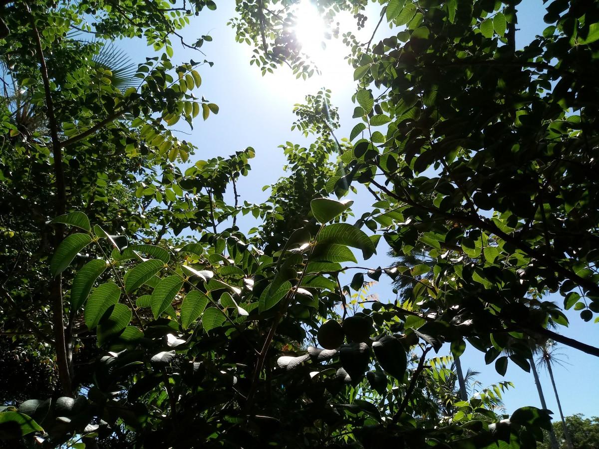 Estudio: Plantas podrían ayudar a localizar a personas perdidas