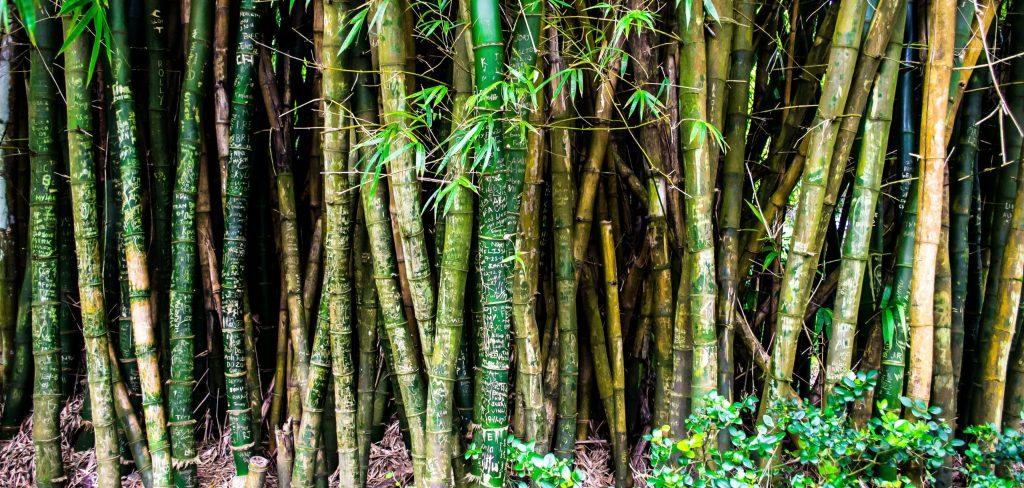 ¿Es realmente el bambú tan sustentable como pensamos?