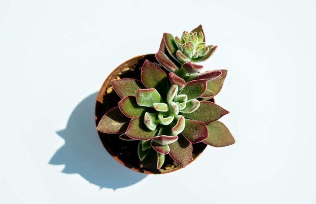 Tips para convertirte en una persona de plantas