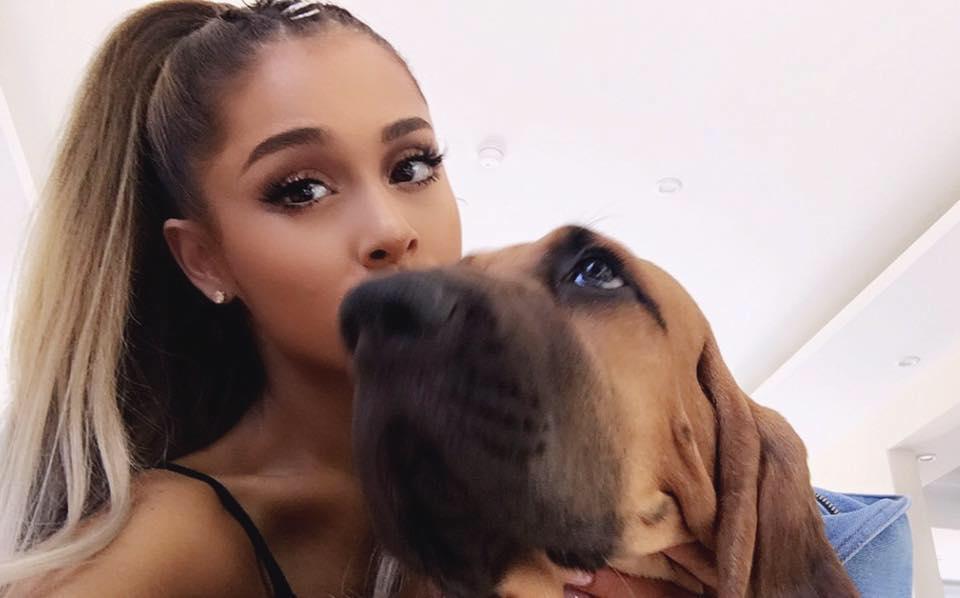 Conoce el centro de adopción de animalitos de Ariana Grande