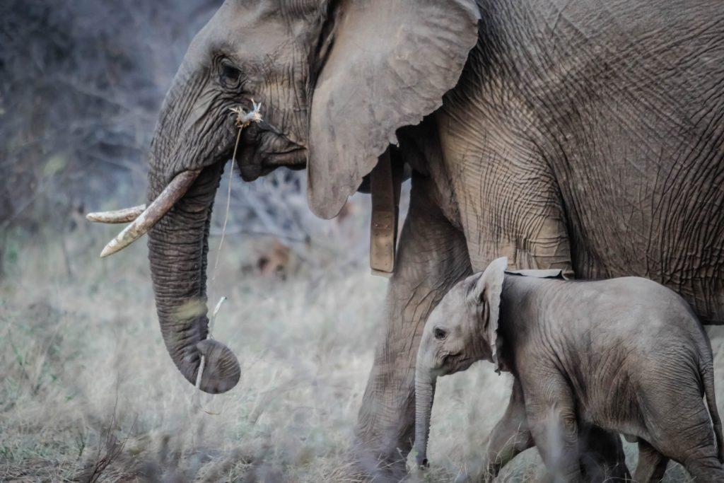 Estos son los embarazos de animales más increíbles que existen
