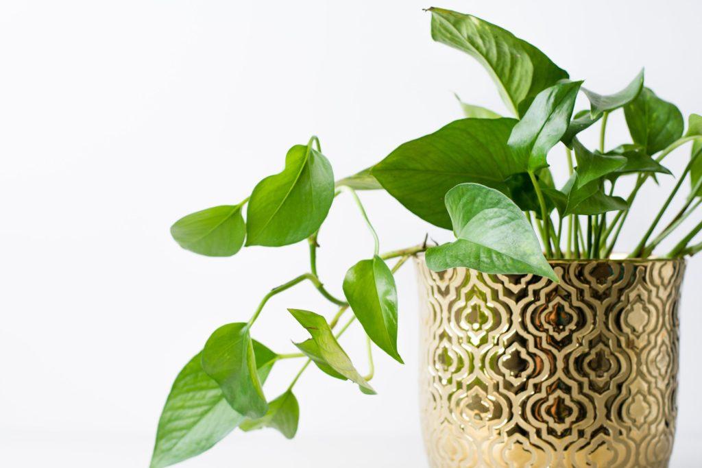 Plantas que te ayudan a combatir el estrés