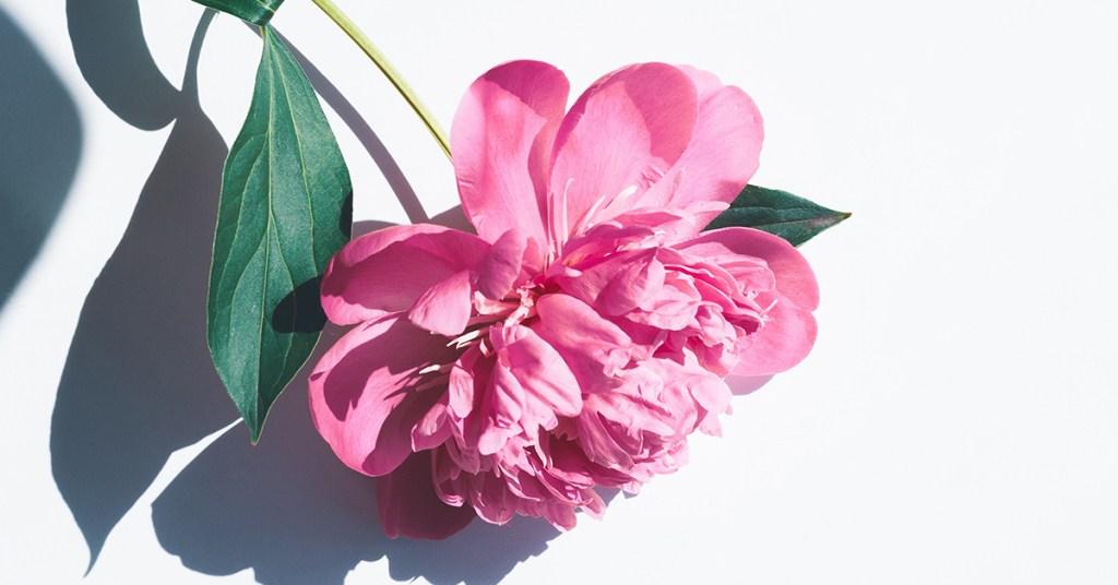 Científicos descubren que esta planta detiene el crecimiento celular del cáncer de mama