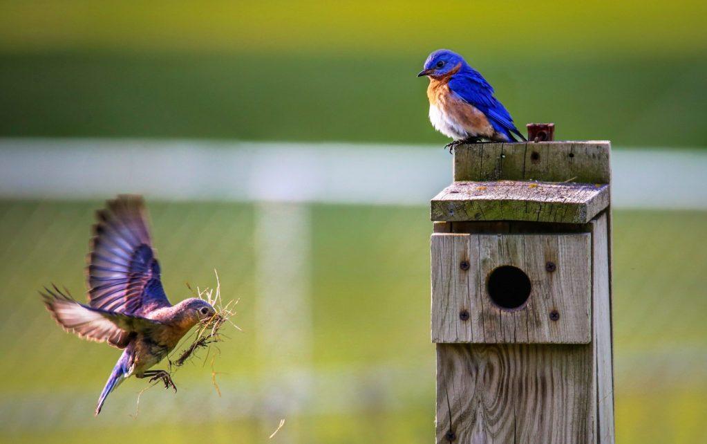 Pájaros que recogen basura entrenados por científico causan sensación