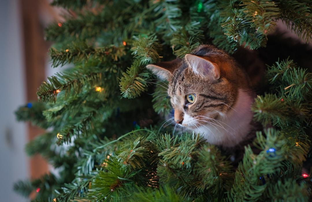 Tips para evitar que nuestra mascota «arruine» el árbol de Navidad
