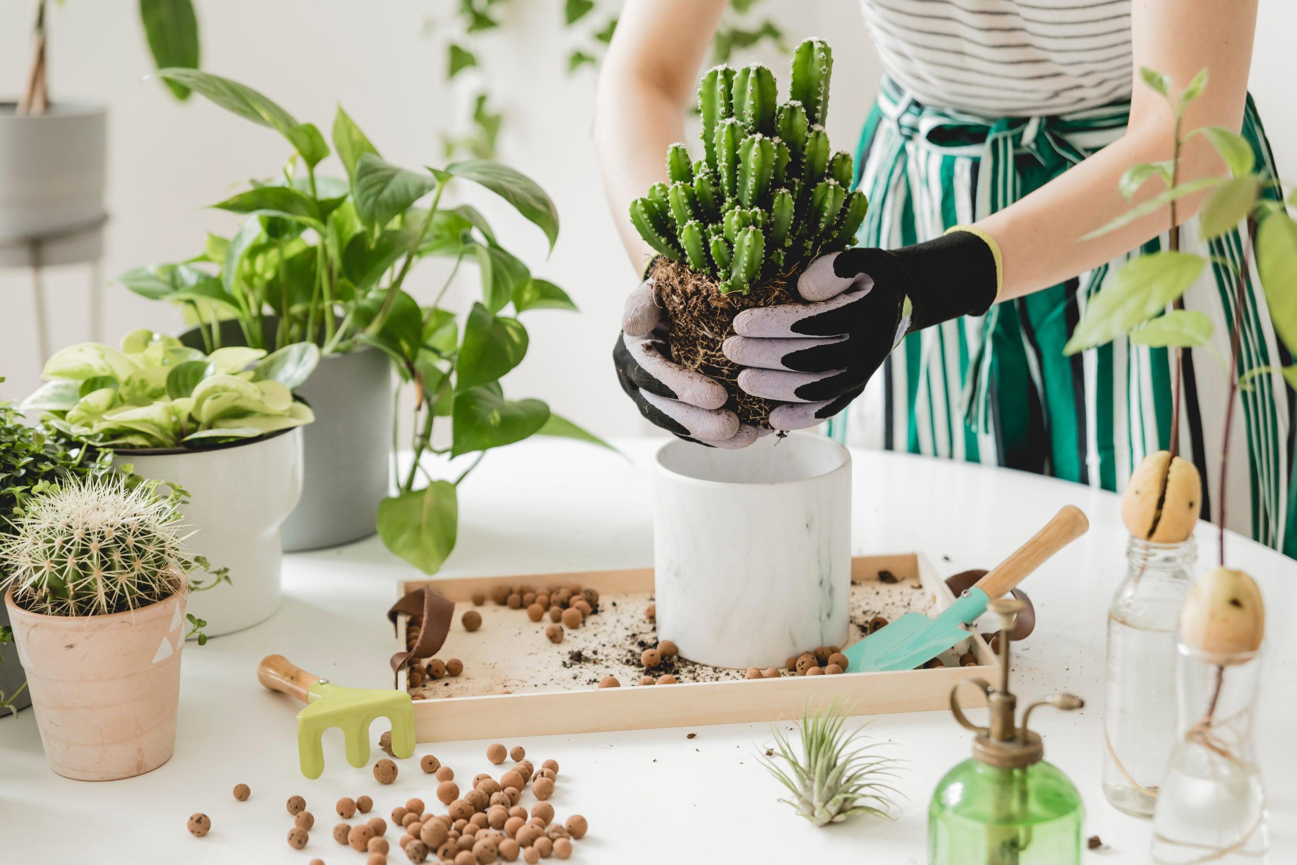 10 pasos para hacer tu propio jardín en casa