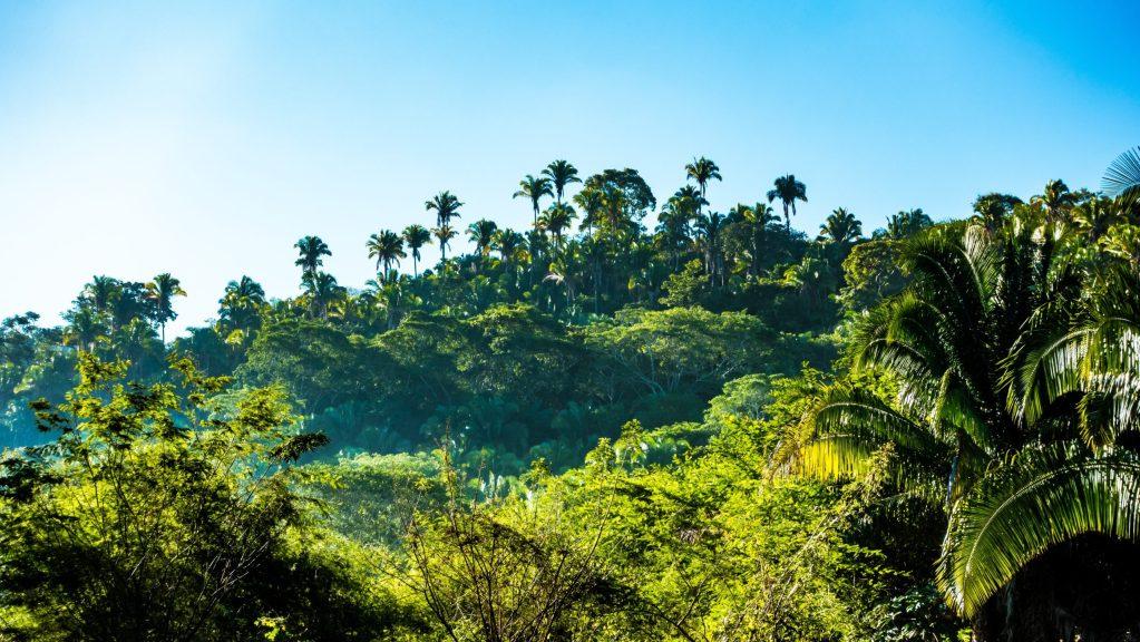 Sustituto sintético del aceite de palma podría salvar las selvas tropicales