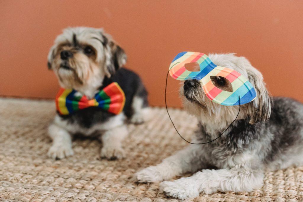 """7 adorables """"dogfluencers""""que debes seguir en Instagram"""