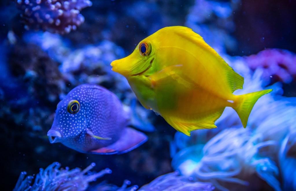 El ruido humano está afectando la vida marina, confirman investigadores