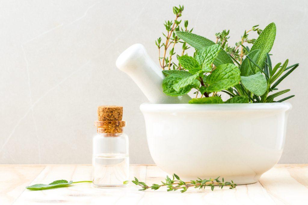 Estas son las plantas medicinales que nunca deben faltar en casa