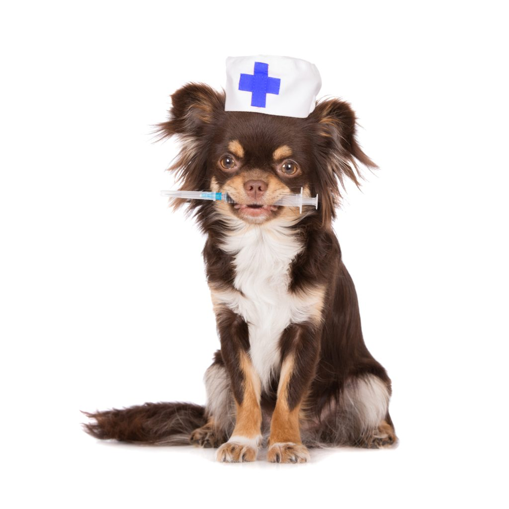 Tal vez debas vacunar a tu mascota contra el Covid-19. Te decimos por qué