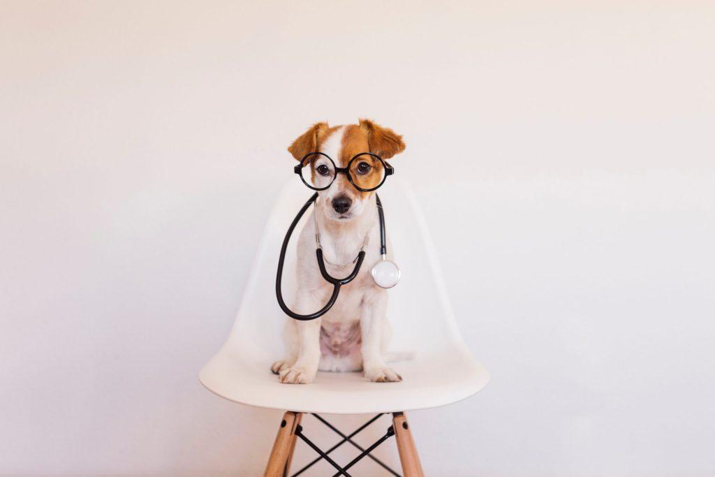 Mascotas: las mejores terapeutas durante la pandemia del Covid-19