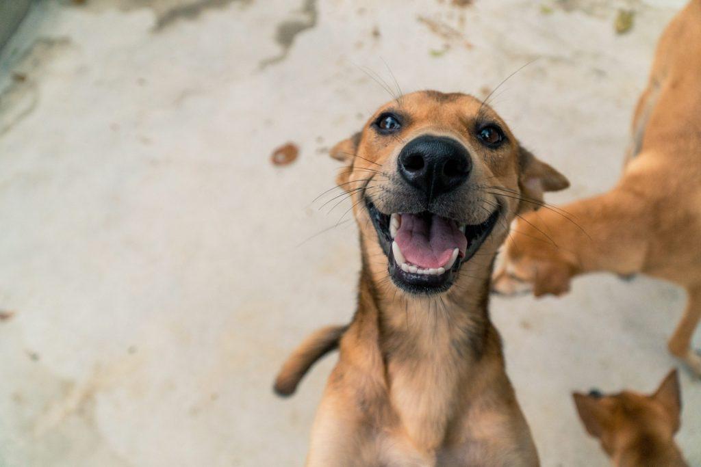 ¿Pueden los animales sentir empatía?